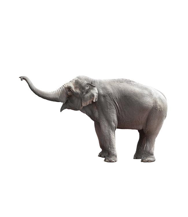 Muursticker Olifant, 100 x 58 cm