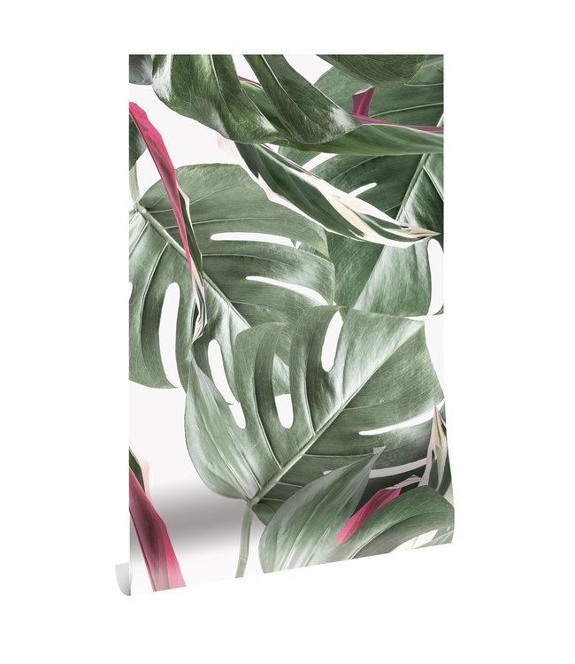 Botanical wallpaper Monstera