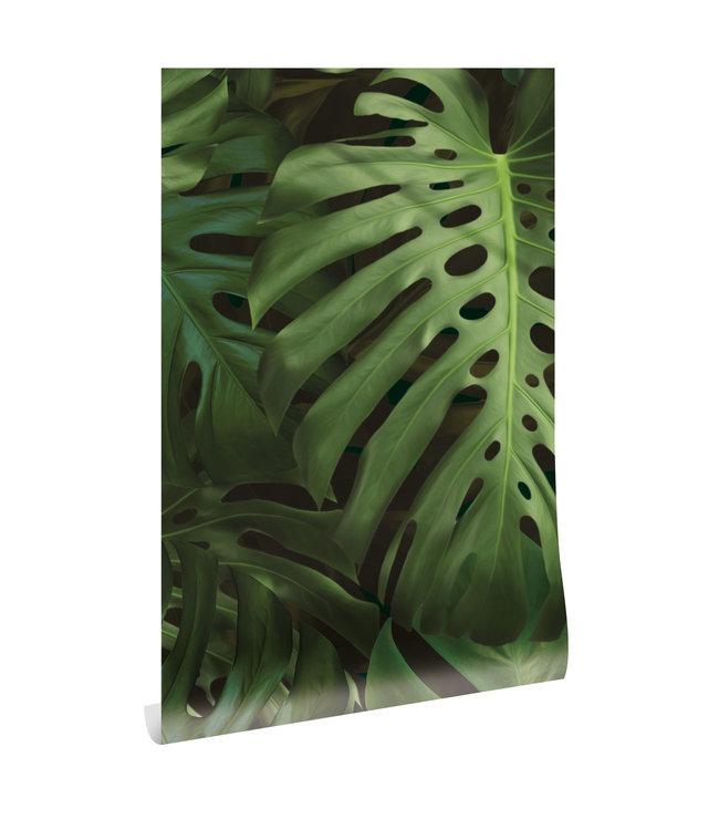 Botanical wallpaper Monstera, 97.4 x 280 cm