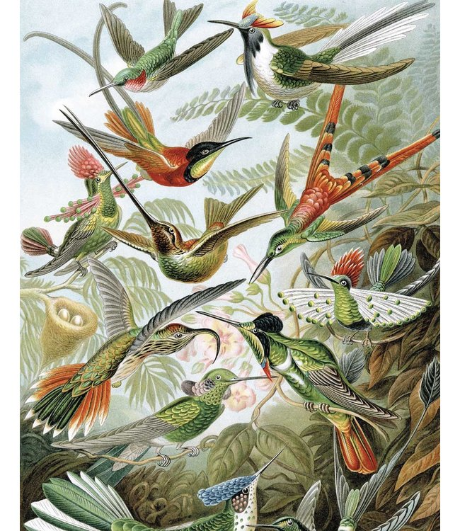 Wallpaper Panel Exotic Birds, 142.5 x 180 cm