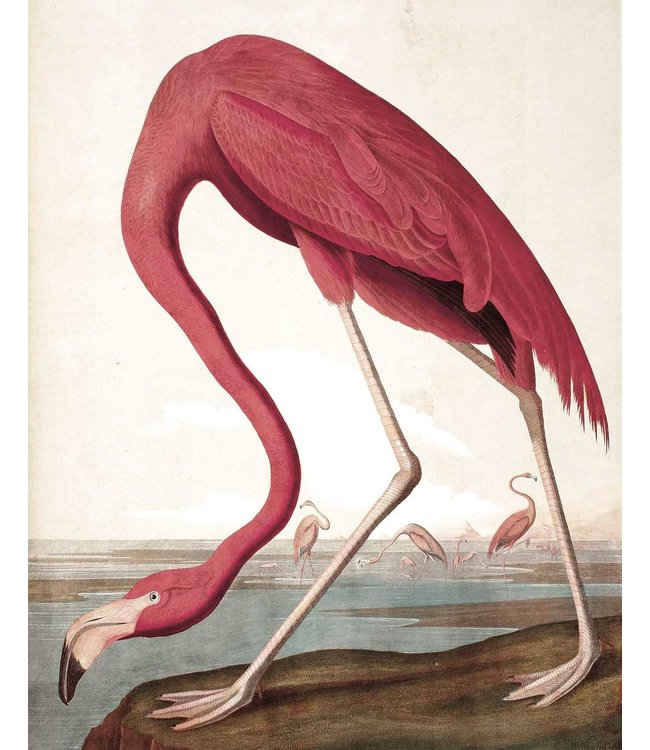 Tapetenpaneel Flamingo, 142.5 x 180 cm
