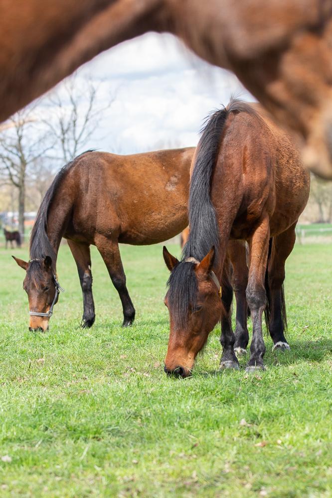 Lente gras komt - Is uw paard er klaar voor?