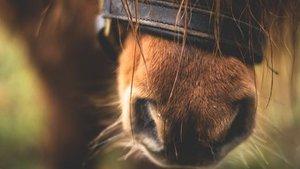 7 redenen waarom paarden afvallen