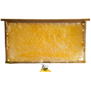 Yoresel Honingraat honing in frame uit Erzincan  (TR) ca 2kg