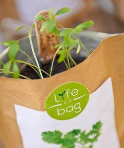 sac à pousser bio - coriandre