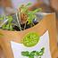 Life in a bag bio kruidenzakje - koreander