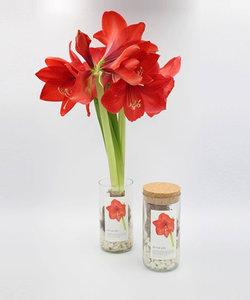 bouteille à fleurs bio - amaryllis