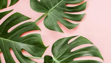 Fleur je huiskamer op, begin met groen!