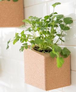 petit jardin intérieur: basilic et coriandre