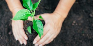 How to live more sustainable