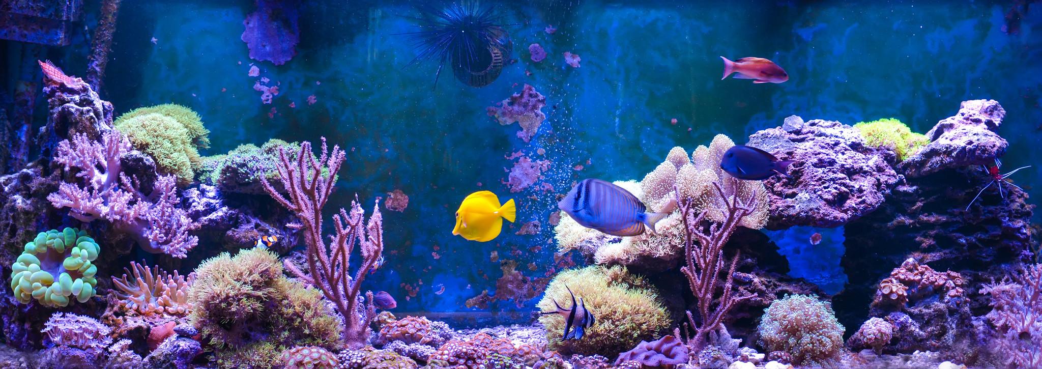 LED Lighting for your Aquarium