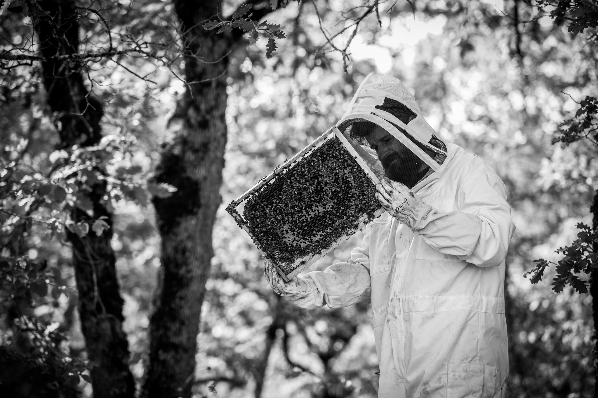 Bijen bij Fabien Jouves