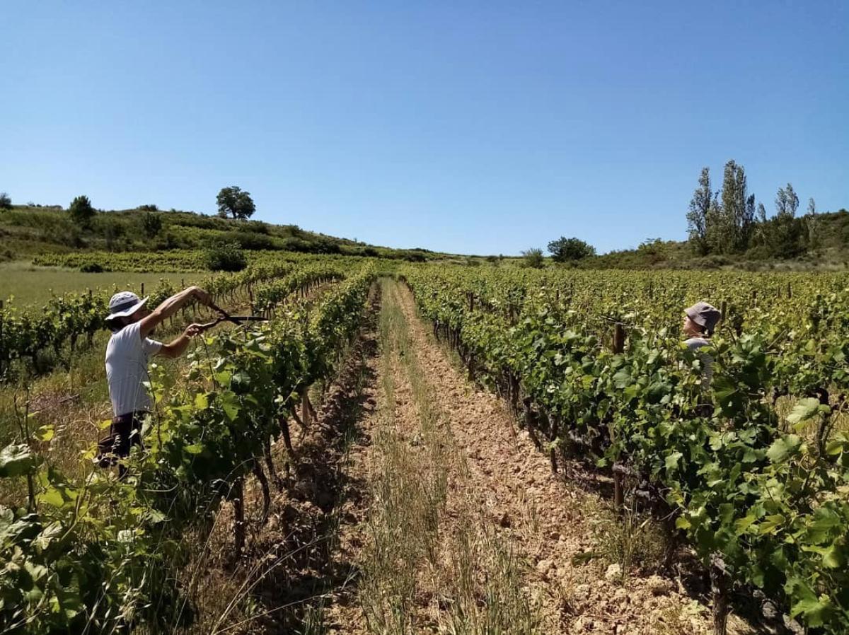 De wijngaarden van La Vrille et le Papillon