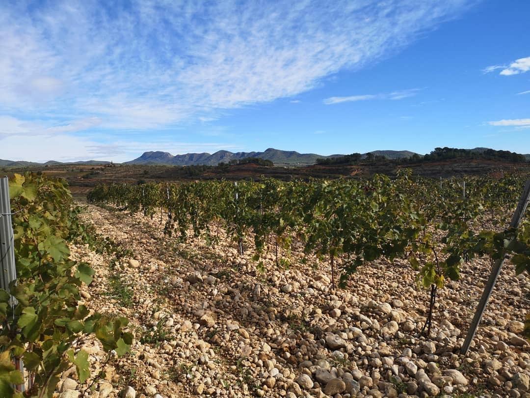 Wijngaard Celler Sanromà