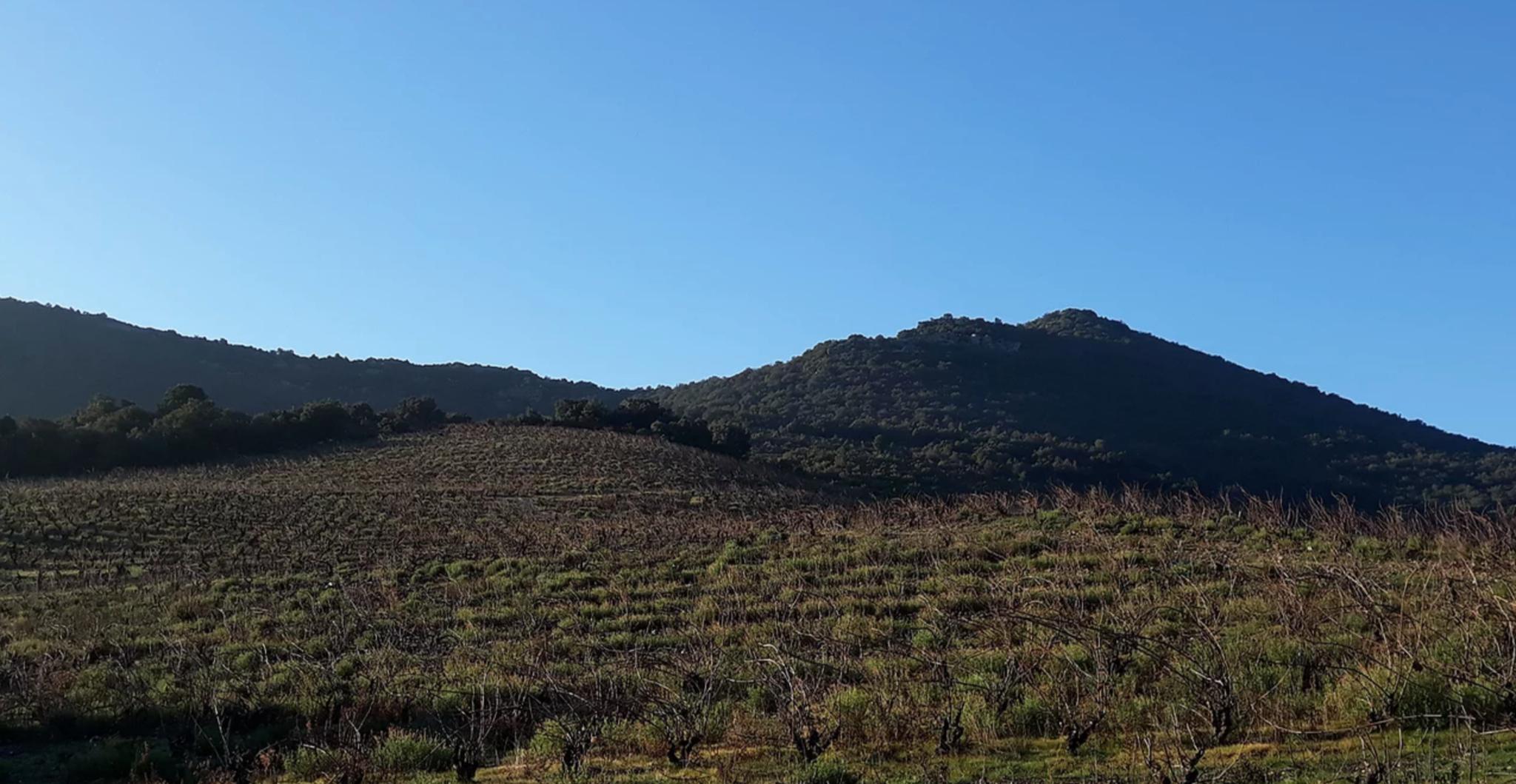 Zicht op de wijngaard débit d'Ivresse