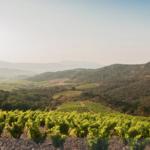 Le Débit d'Ivresse - Côtes-Catalanes