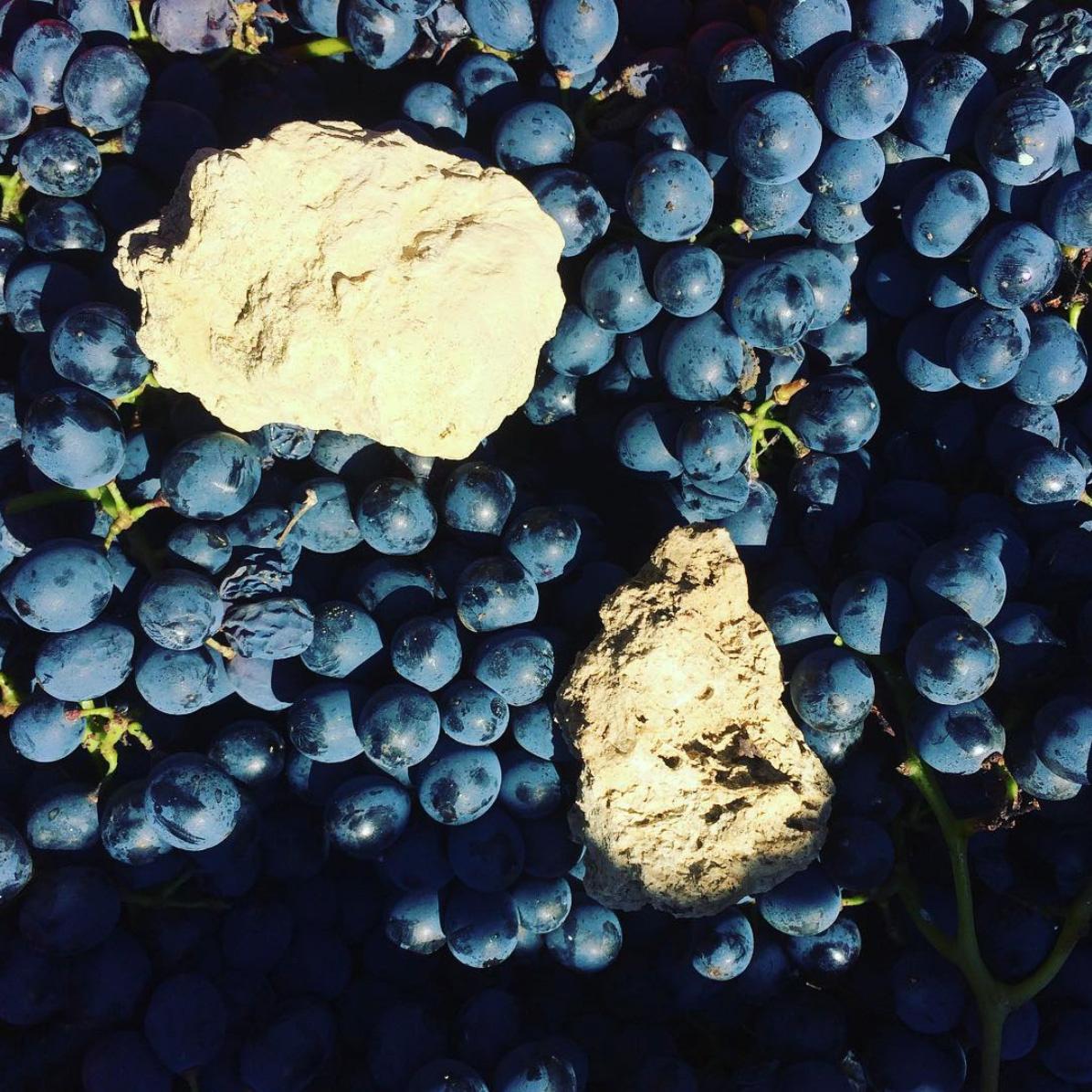 oogst Barbera Sette vini 2018