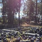 Les Bois Perdus - Ardèche