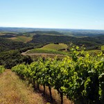 La Graine Sauvage - Languedoc