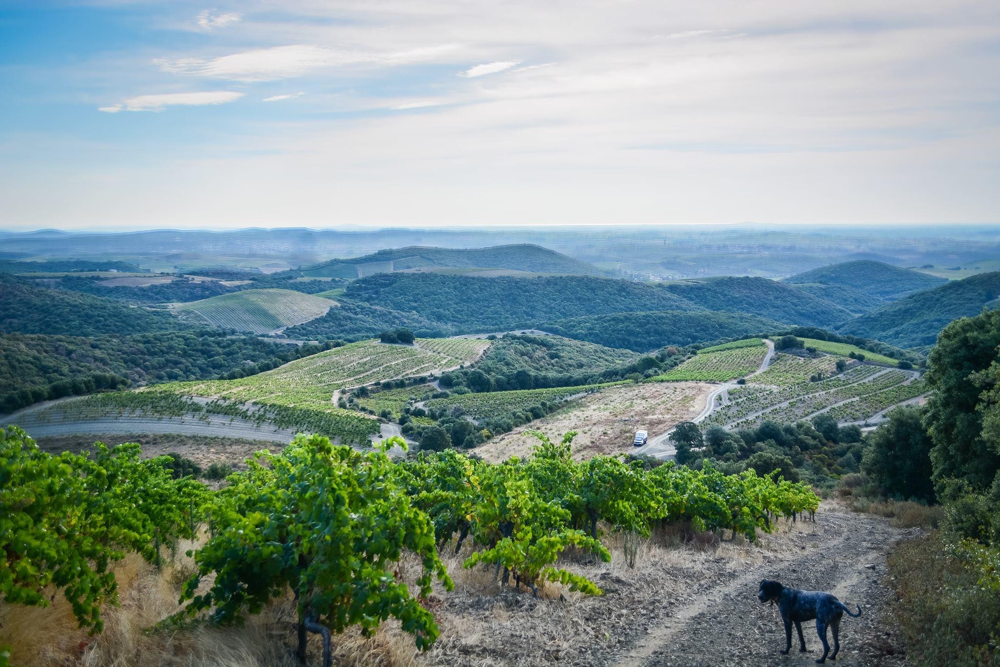 Wijngaarden La Graine Sauvage