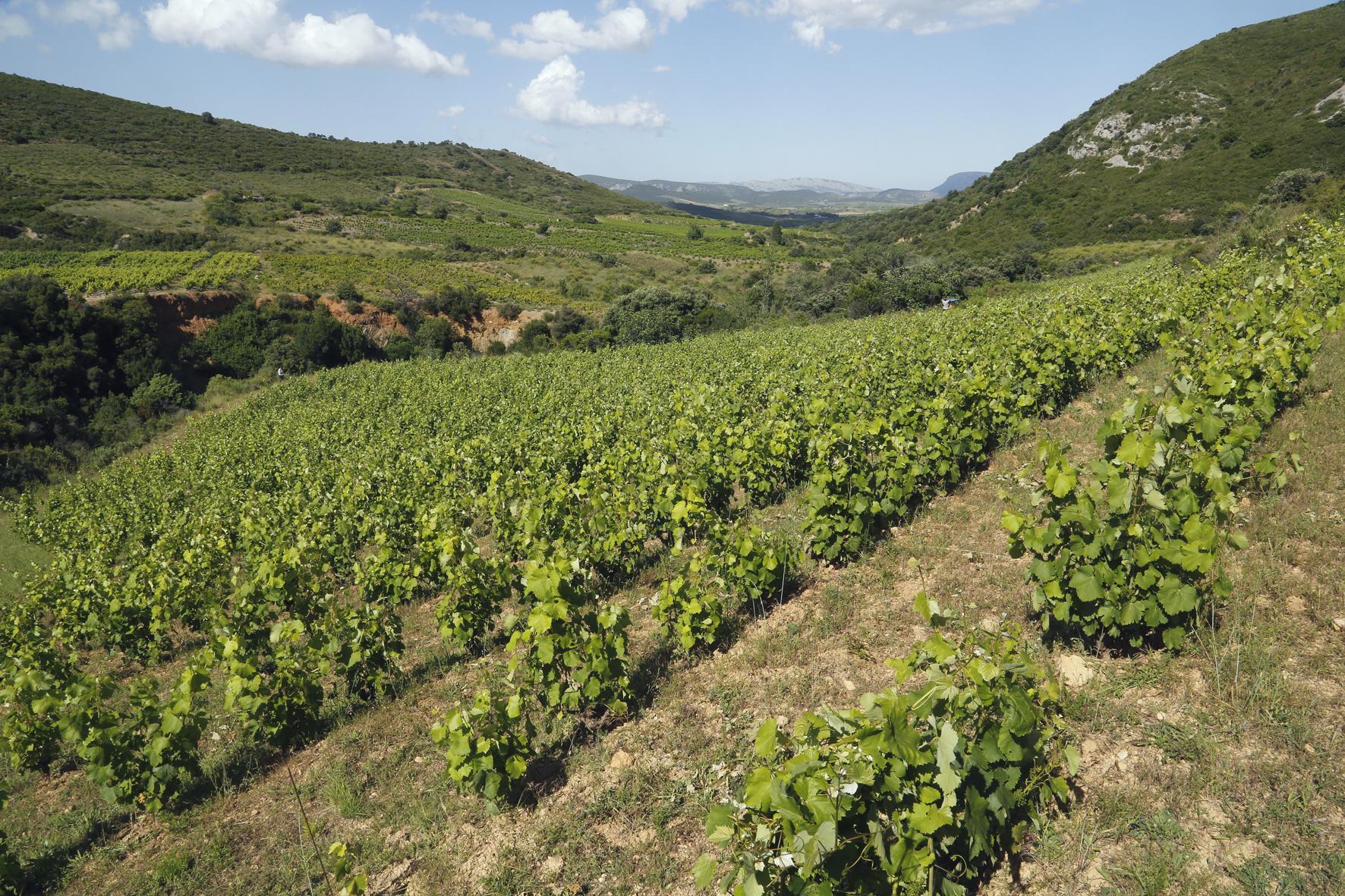 La Tri Fontoj wijngaard