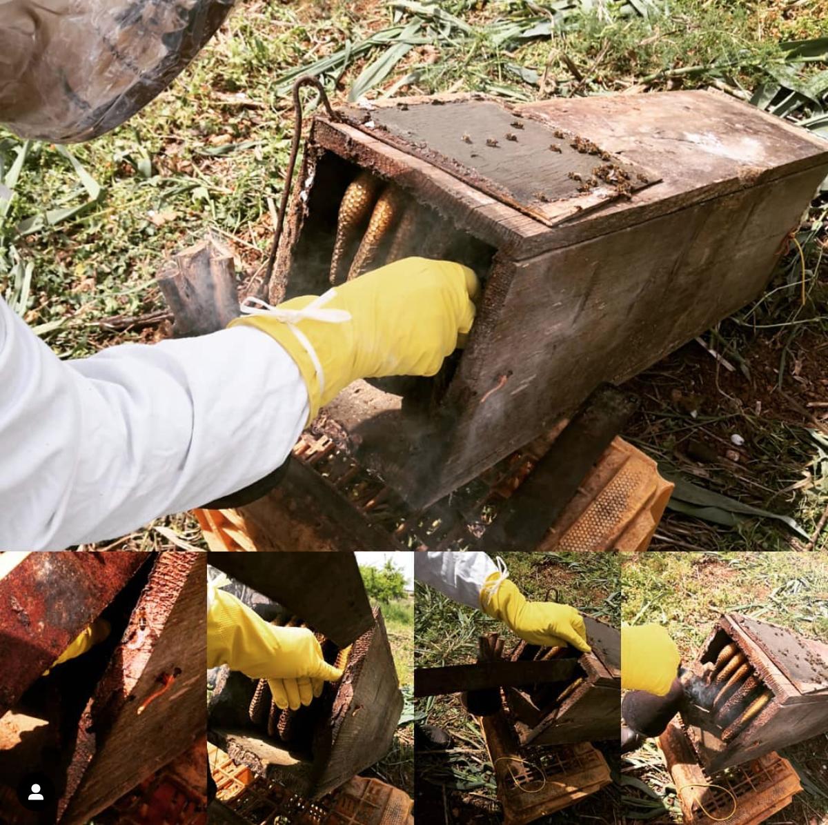 Honing bij Viteadovest