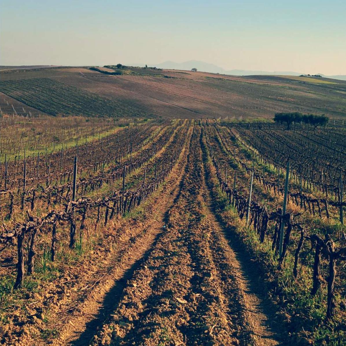 Wijngaard Viteadovest
