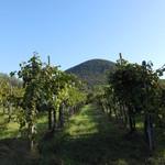 I Castagnucoli - Veneto