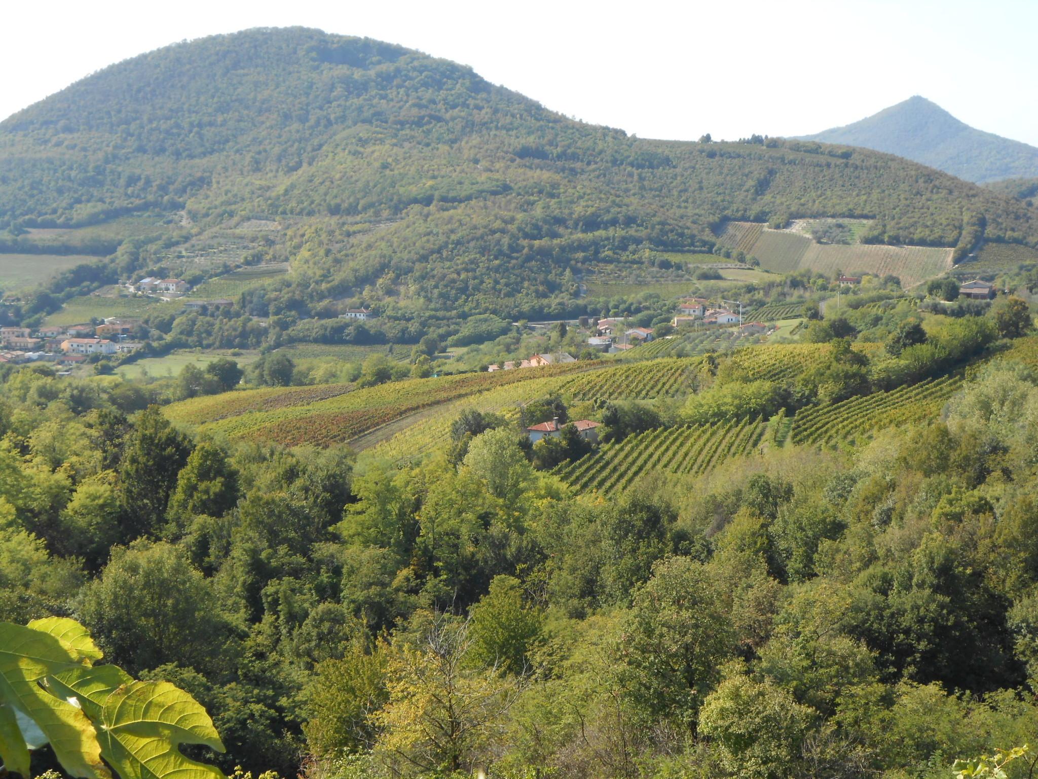 Wijngaard I Castagnucoli