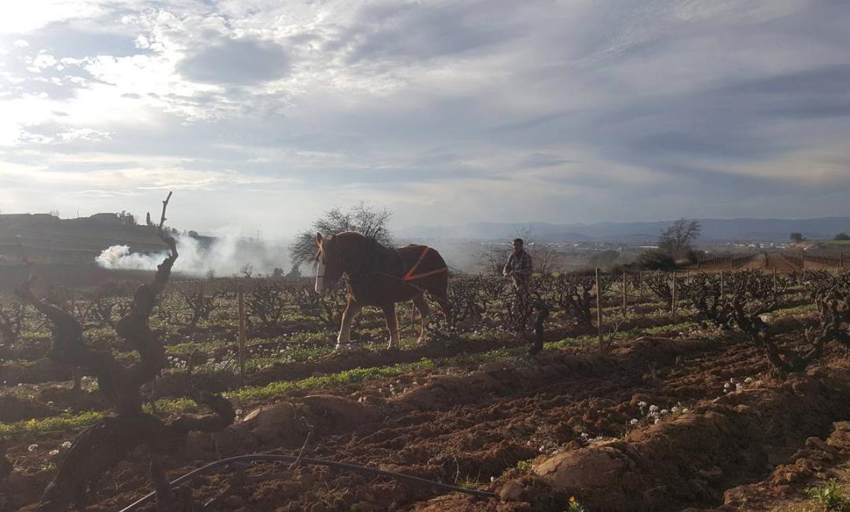 Paarden bij Mas Candí
