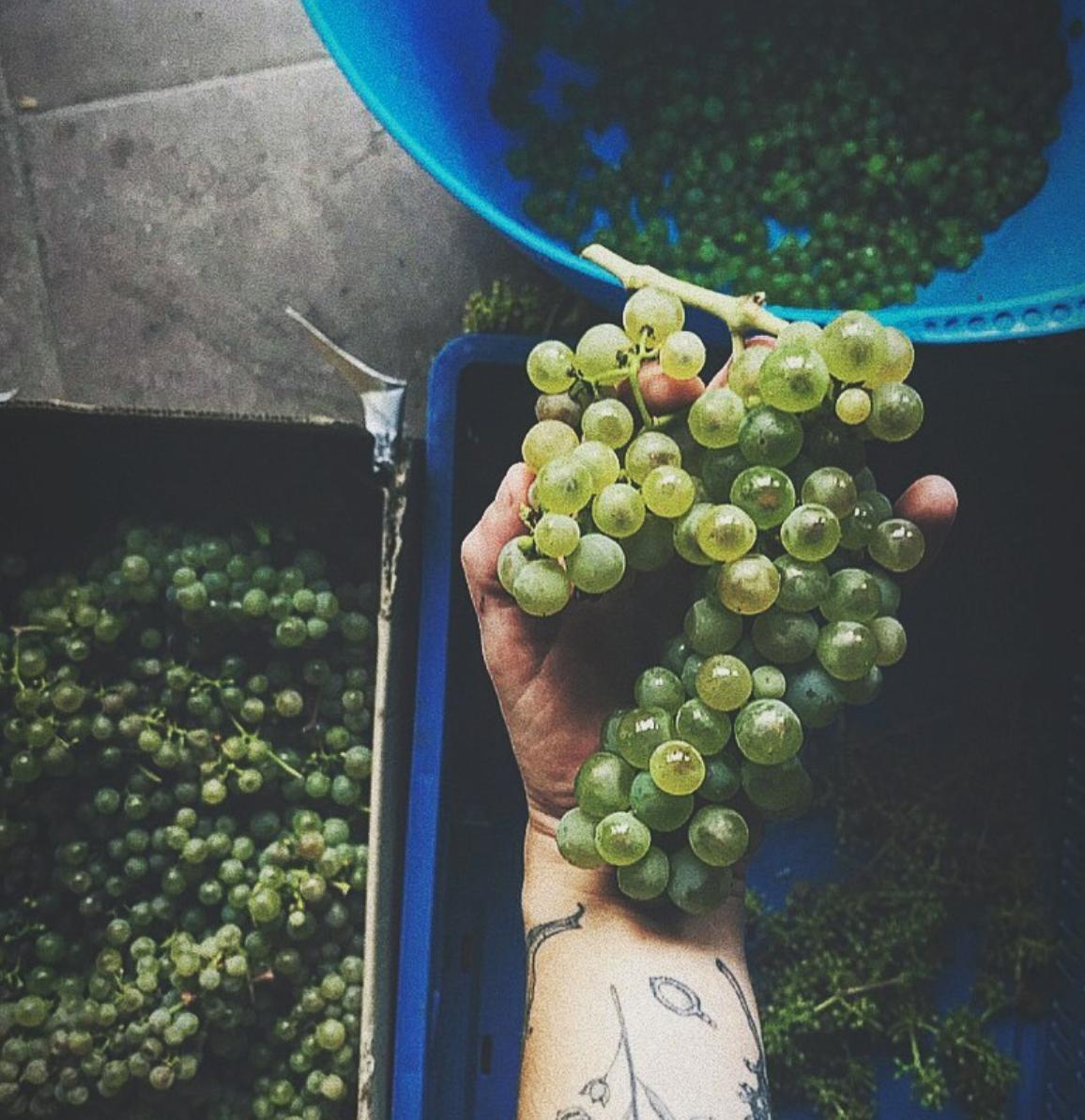 Drap druiven