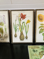 Set of 2 elongated frames with colourful lithographs of flowers (sunflower, lily of the valley)