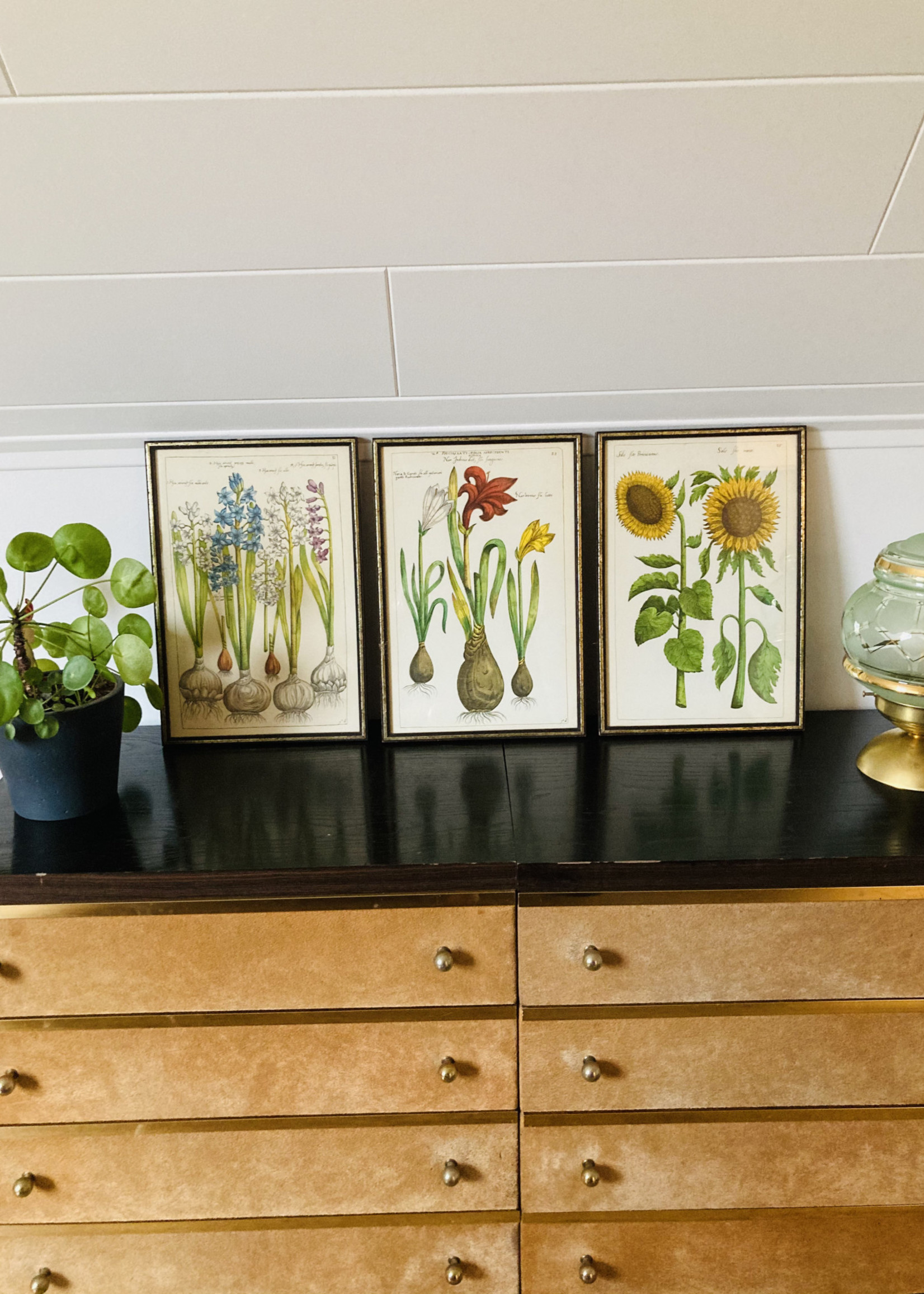 elongated frames with colourful lithographs of flowers (sunflower)