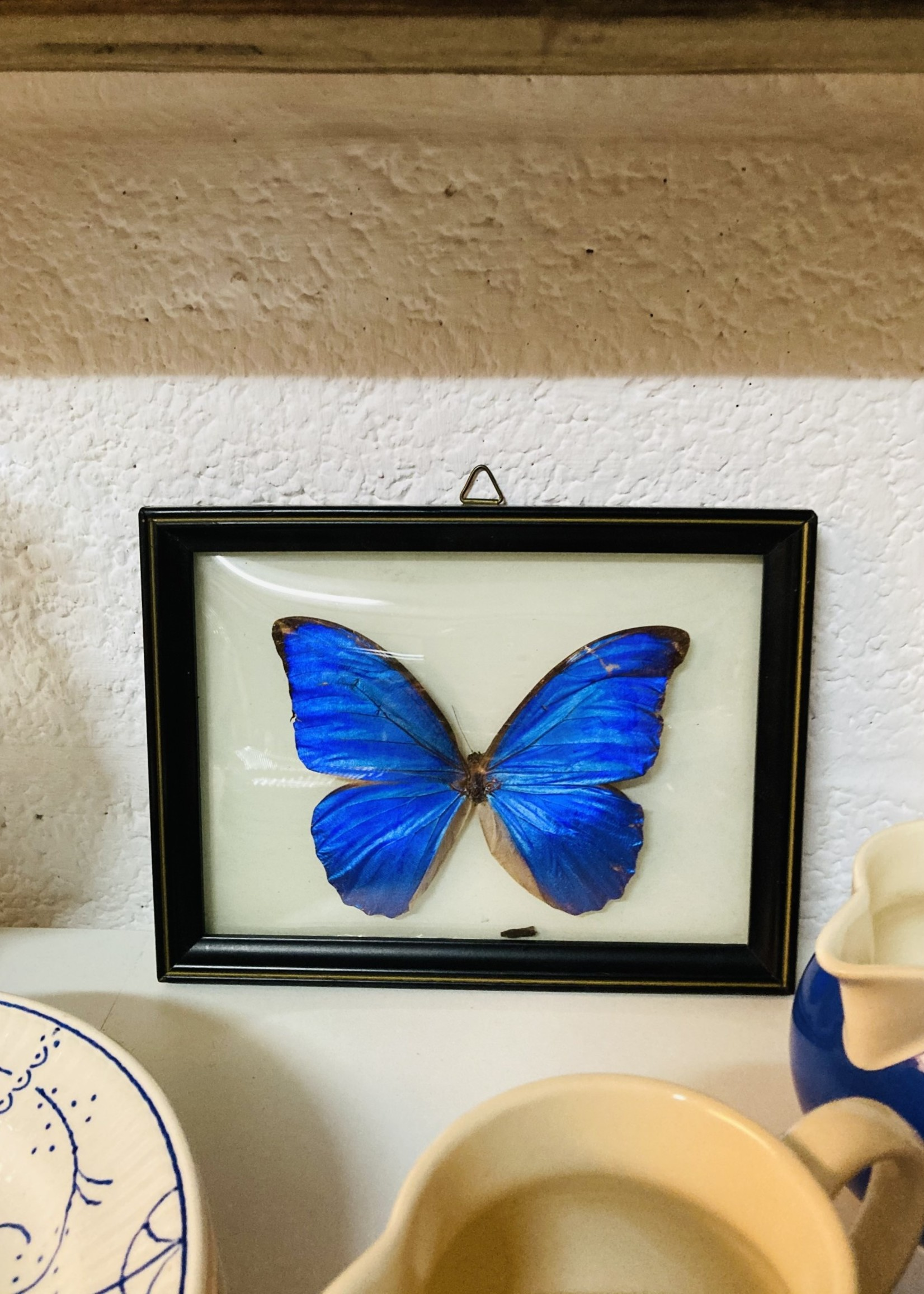 Vintage Blue Butterfly in small curved frame