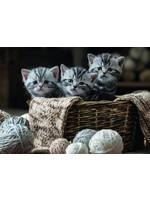 Puzzel Cute Kittens 1000 Stukjes