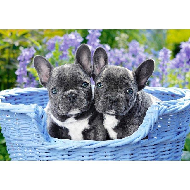 Castorland French Bulldog Puppies - 1000 Stukjes