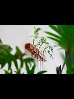 Spore Nursery Hangend stekstation