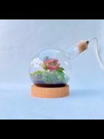 Rondbodembiosfeer met lamp
