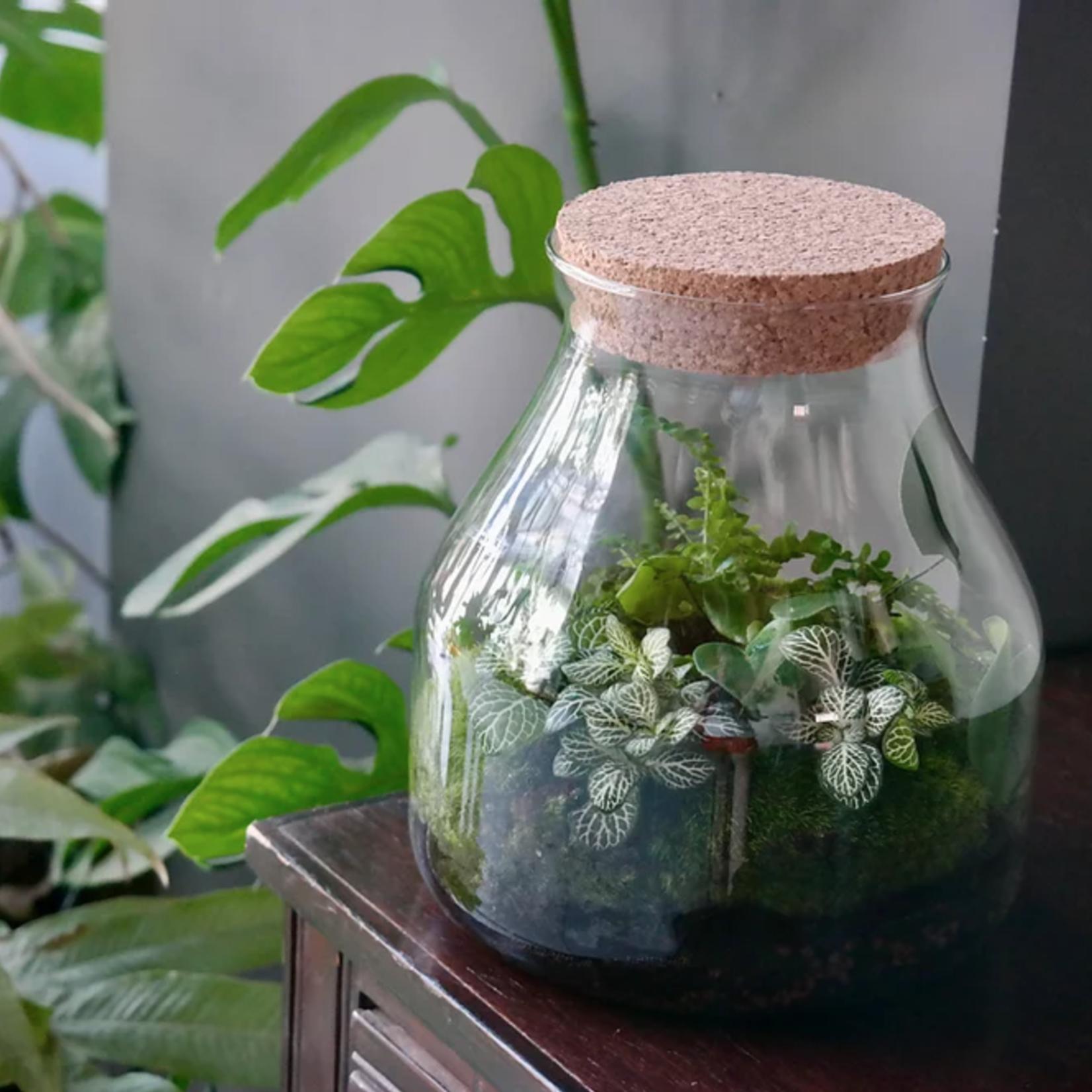 DIY mini biosfeer