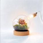 Spore Nursery Rond bodembiosfeer met kurk en lamp