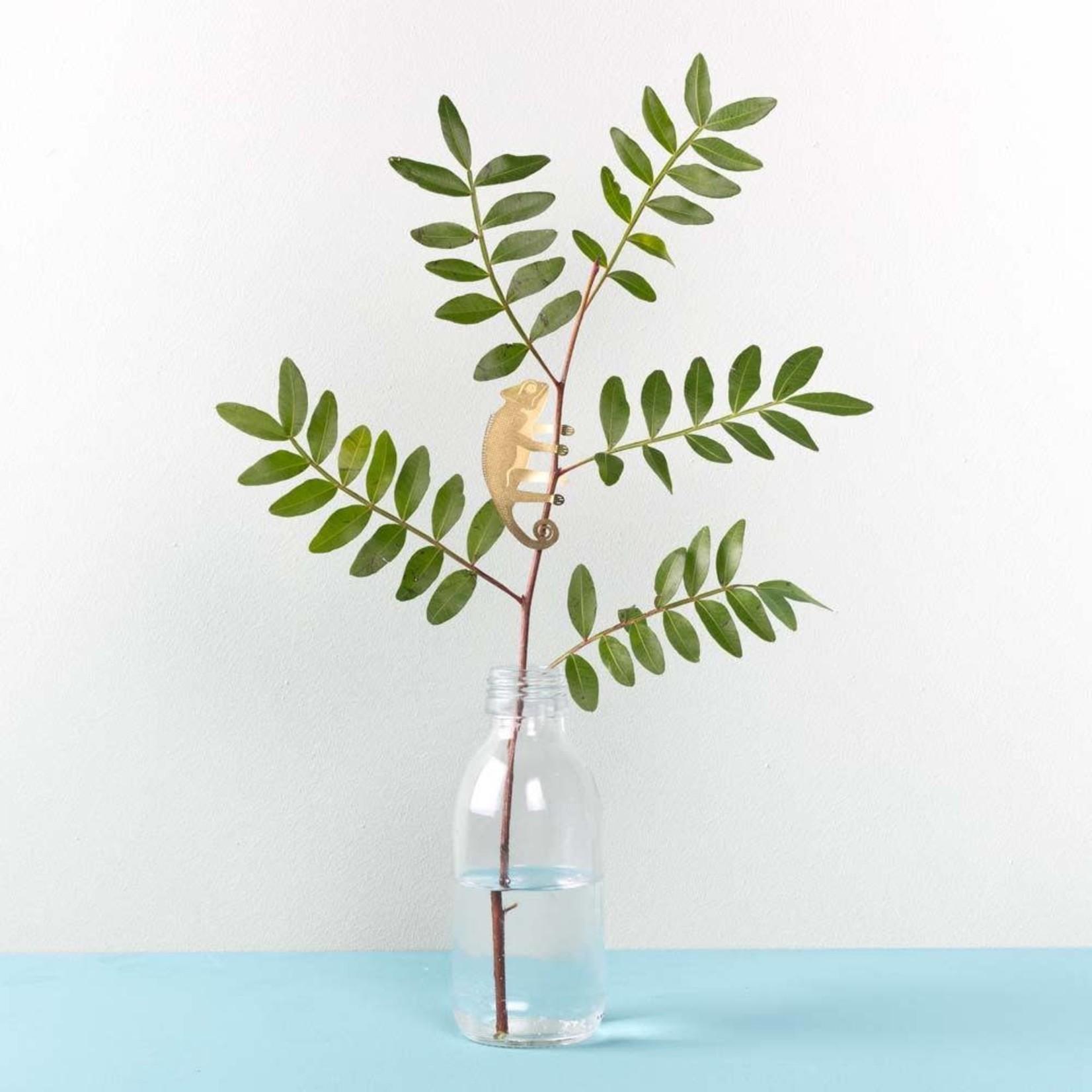 another studio Plant Animal - Chameleon