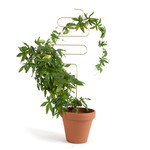 Botanopia Plant stake - Squiggle