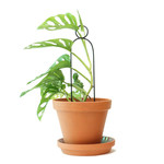Botanopia Mini plant stake zwart - Pompom