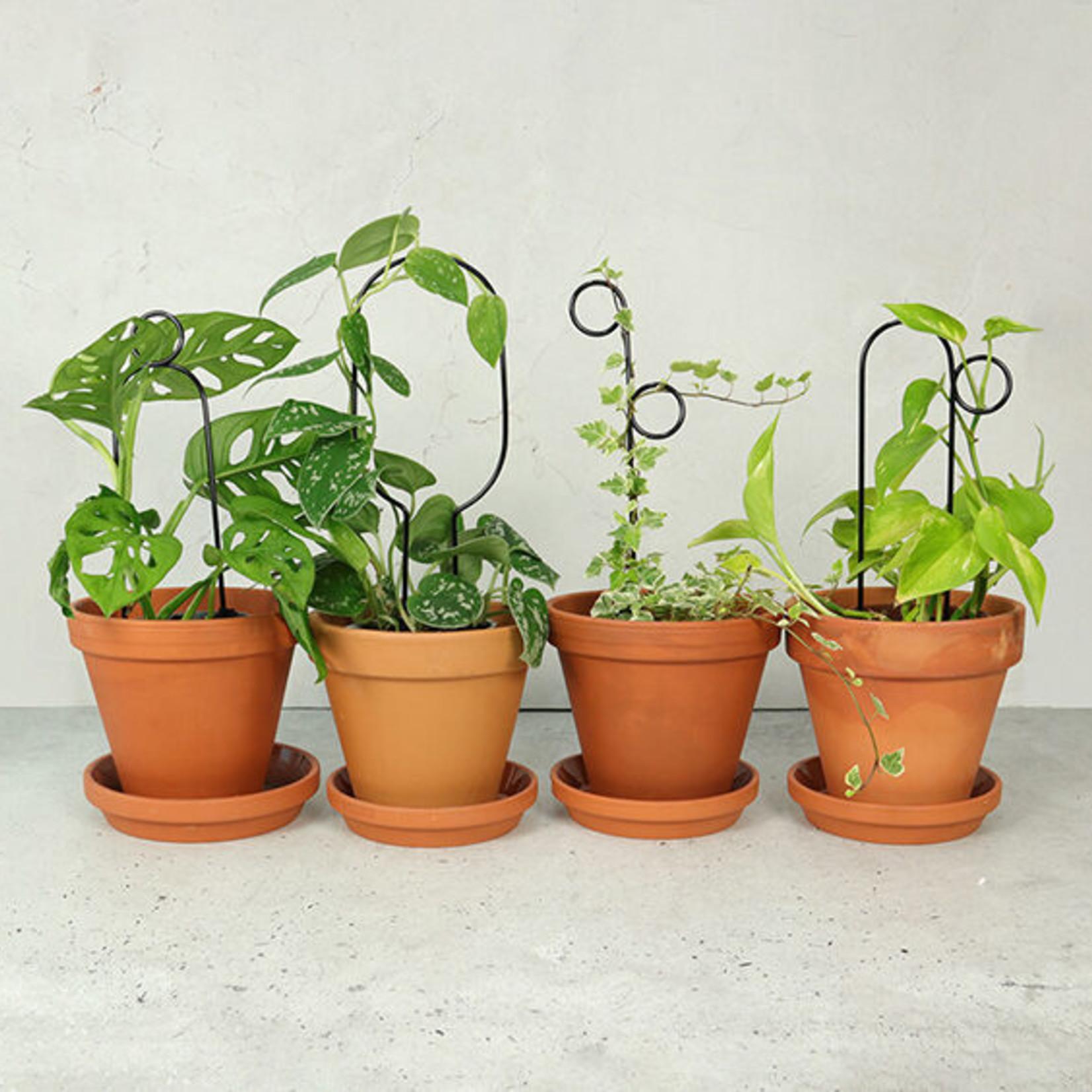Botanopia Mini plant stake zwart - Perch