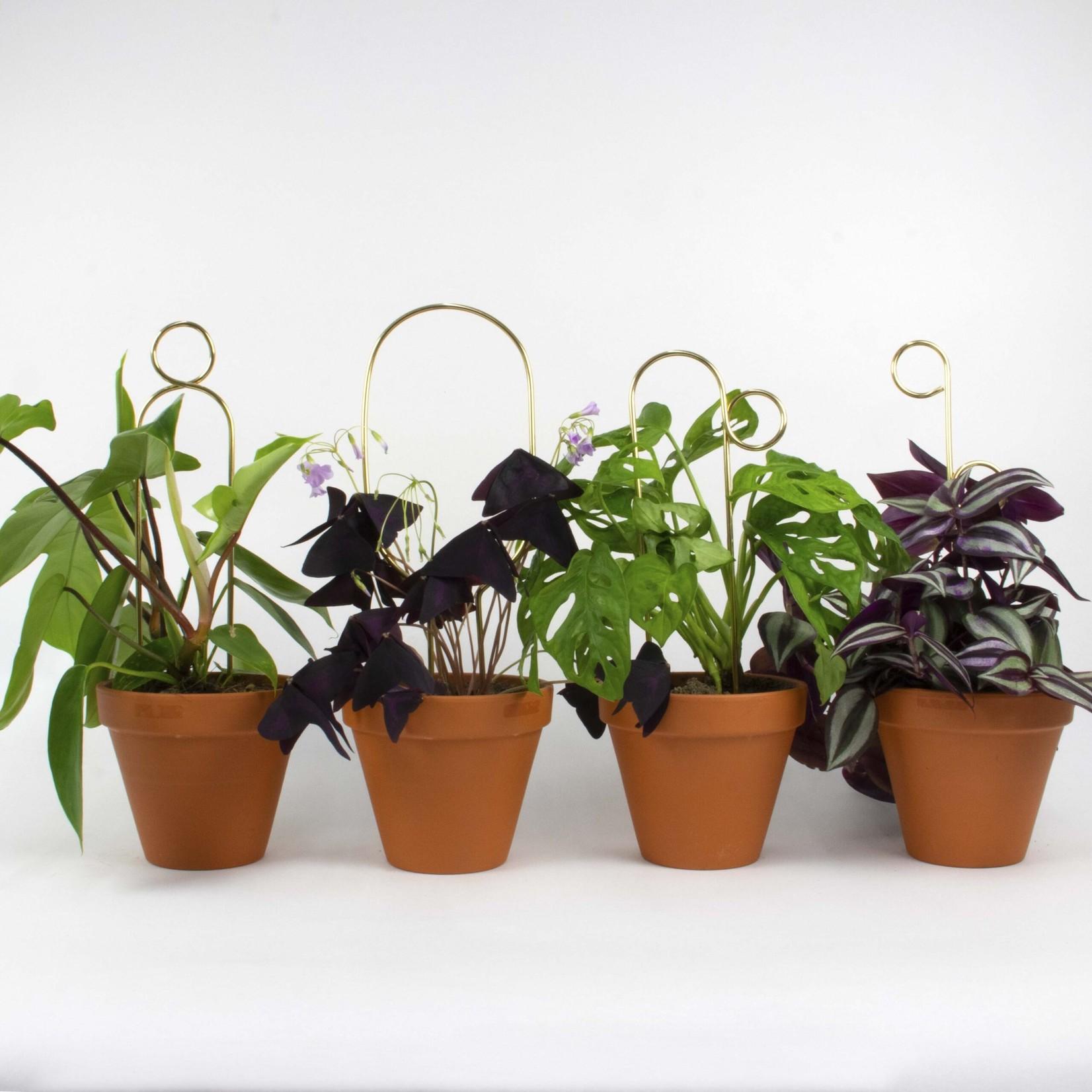 Botanopia Mini plant stake goud - Pompom