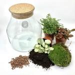 Spore Nursery DIY-box mini biosfeer 1
