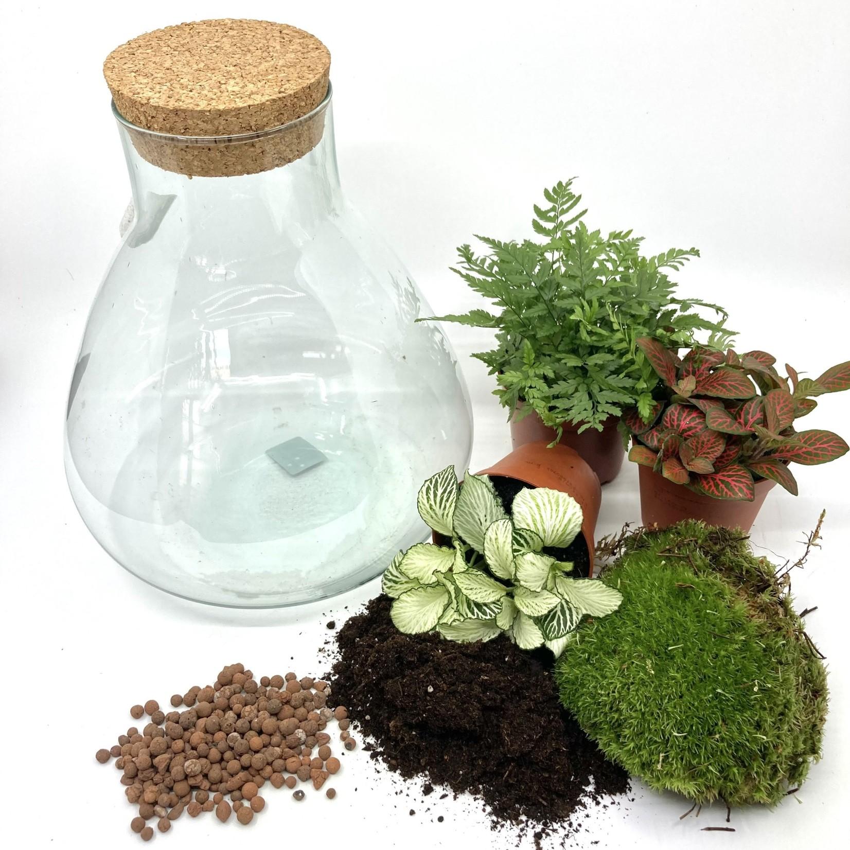 Spore Nursery DIY-box mini biosfeer 2