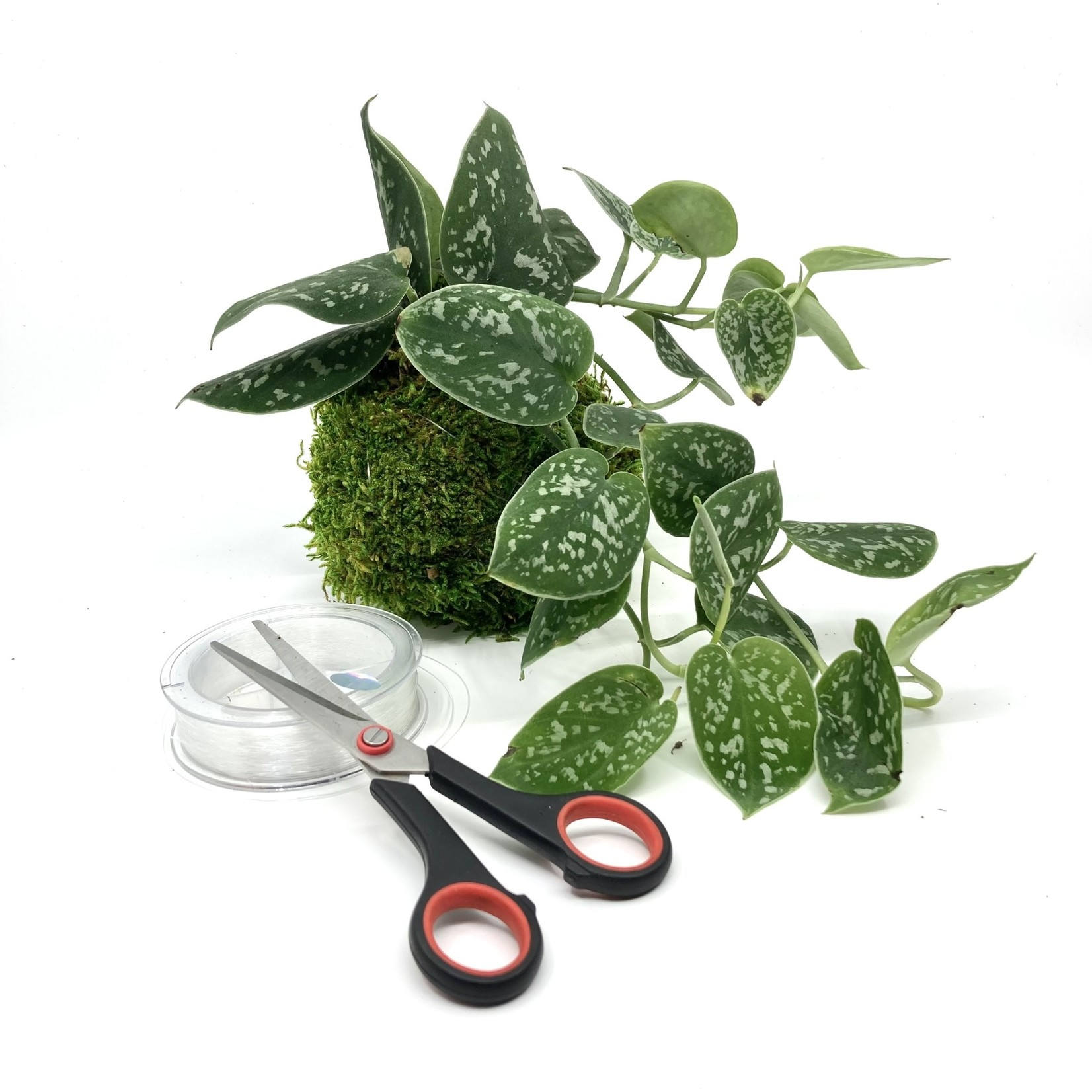 Spore Nursery DIY-box kokedama