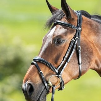 HFI HFI technical  bridle