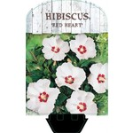 Hibiscus syriacus 'Red Heart' (Chinese Roos of Altheastruik)